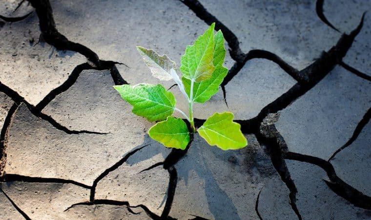 Resiliência: o poder de superar a dor e recomeçar a vida